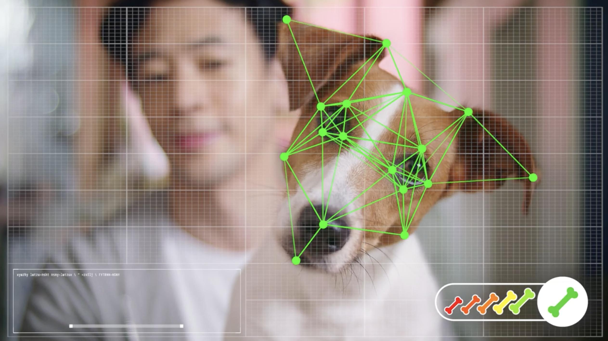 🐶 Case Study: con Petz i cani comprano online.